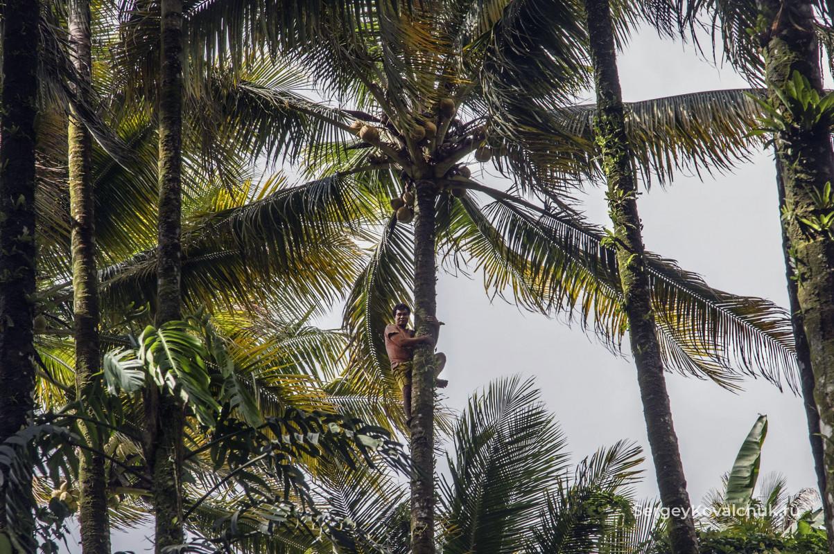Индонезия, Молуккские острова